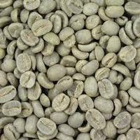 Robusta Green Coffee Beans Price