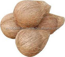 south Indian Fresh Semi Husked Dried Coconuts