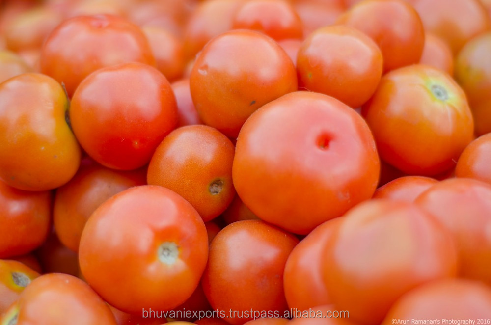 Fresh Indian Tomatoes/Tomatoes!