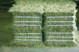 Alfafa Hay For Animal feeding stuff Alfalfa / alfalfa hay / alfalfa hay for sale