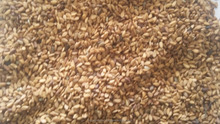 New Season and Good Quality Pure Natural Yellow-white Sesame Seeds to Sell with Good and Cheap price