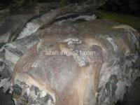 High Quality Dry and Wet Salted Donkey / Goat Skin / Cow Hides