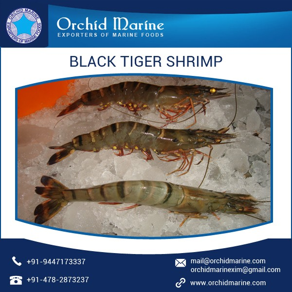 Premium Quality Different Sizes Black Tiger Frozen Shrimps for Sale