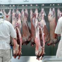 New Zealand Sheep Mutton - Frozen