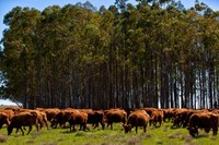 Australia Beef meat !!! Premium Supplier !!!