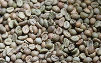 Vietnam Washed Robusta Coffee bean/UNROASTED COFFEE BEANS/GOOD OFFERS