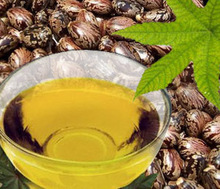 Refined Castor Oil and seeds