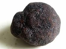 100% Natural Pure Powder Black Truffles Wild Mushrooms Extract