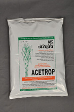 Acetobacter diazotrophicus for sugarcane and sugary fruit crops