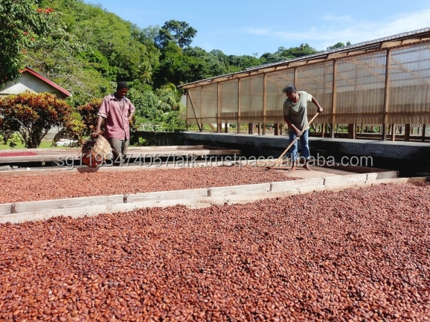 Hot Sale Cocoa Beans/Cocoa Extract From The Processing Machines For Whole World Buyers
