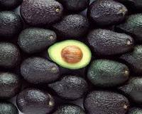 BEST QUALITY OF FRESH AVOCADOS FRUIT