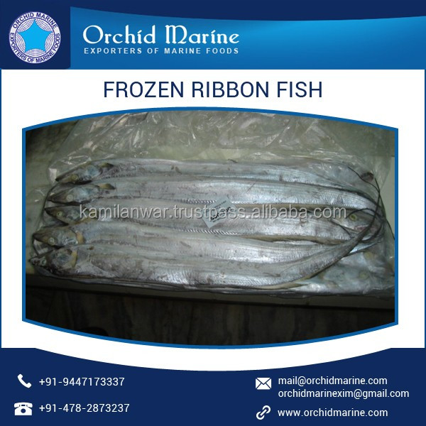 High Quality Fresh Stock Ribbon Fish Available in Hygienically Packaging