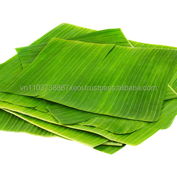 Fresh banana leaf/food wrapping