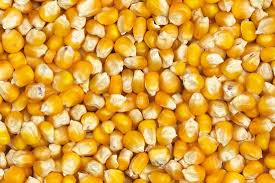 YELLOW CORN/MAIZE FOR ANIMAL FEED / POULTRY FEED - BRAZIL ORIGIN