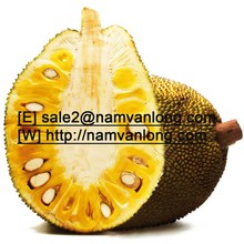 FRESH JACKFRUIT at VERY HIGH QUALITY and THE BEST PRICE.........