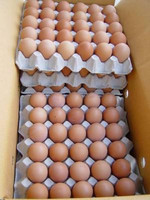Fresh White and Brown Chicken Eggs