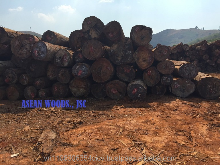 Keruing wood logs