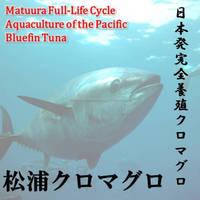 Matuura bluefin tuna is luxury seafood restaurant is offered.