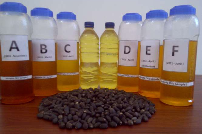 Refined & Crude Jatropha Oil for Biodiesel ,Jatropha Oil for Biodiesel