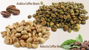 Robusta Coffee Bean S13/S16/S18 with Good Price for All Importers