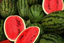 fresh water melon For Sale Good Price