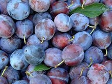 dried black plums best price good quality