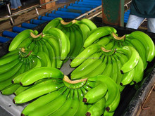 Grade A Fresh Cavendish Bananas