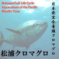 Matuura bluefin tuna freshness is better than bluefin tuna that was caught in the fishing boat.