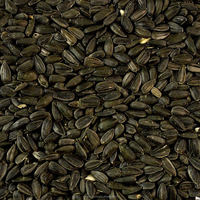 Australian Black Sunflower Seeds