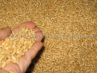 DURUM WHEAT FACTORY PRICE 2017