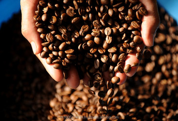 Robusta Coffee Beans with Vietnam Wholesale