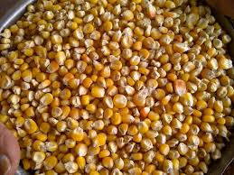 New crop bulk dried yellow corn /yellow maize for animal feed