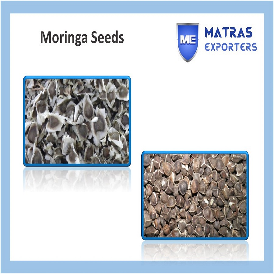PKM1 Moringa Oleifera Seeds for Extracting Oil
