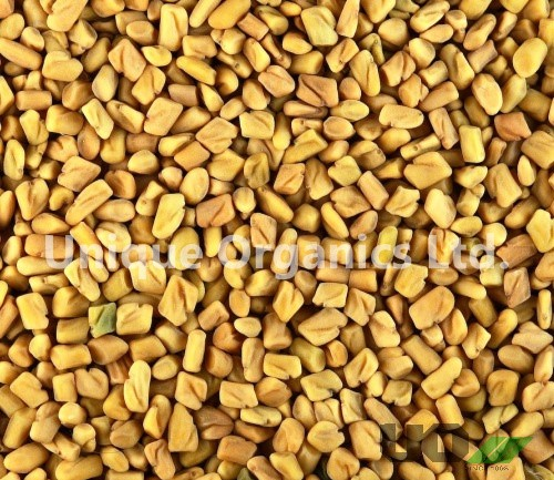 Good Quality Sortex /Machine Clean/Colombo Fenugreek Seed