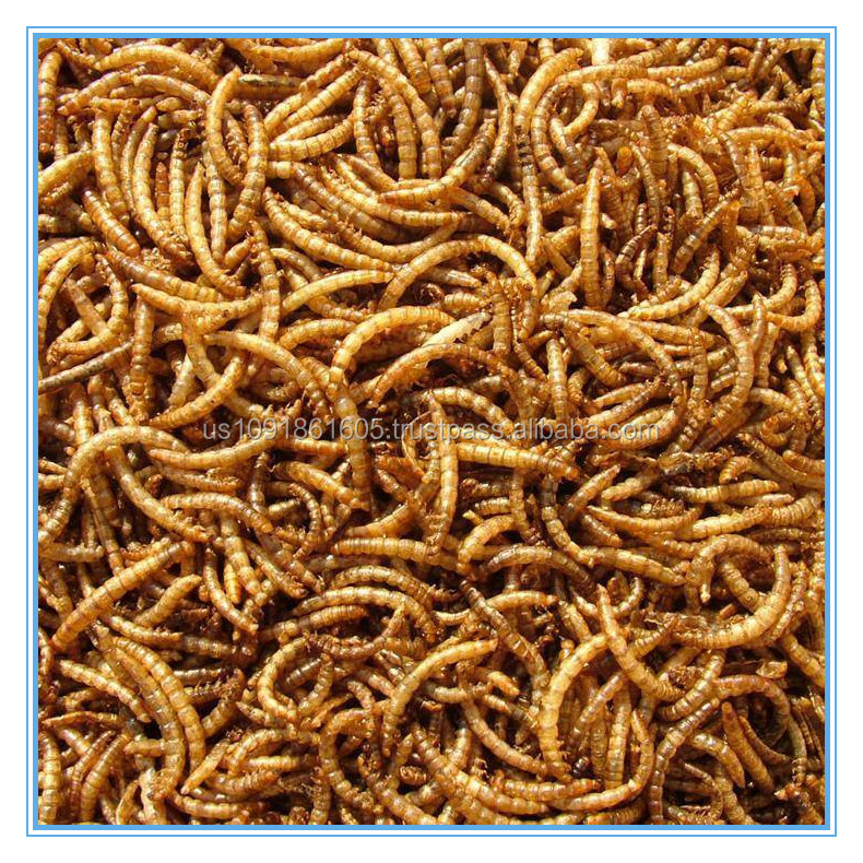 Mealworms Pet Supply