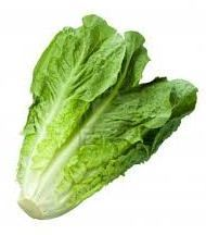 High quality Fresh Lettuce