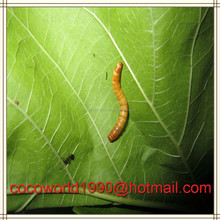 wholesale dried mealworms/bulk chicken feed/wholesale chicken feed