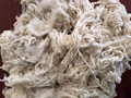 COTTON ROVINGS/ COTTON WASTE
