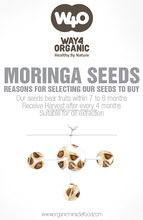Buy PKM1 Moringa Hytbrid Seeds From India
