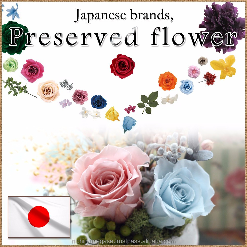 Beautiful everlasting flower preserved with various colors