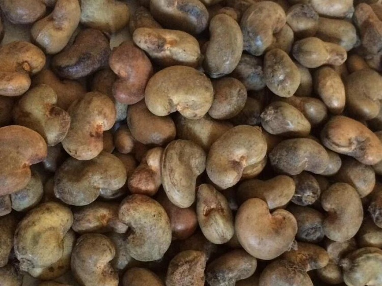 Raw Cashew Nut - Guinea Origin