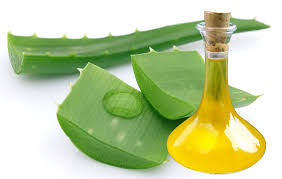 Natural Plant Extract Aloe Vera