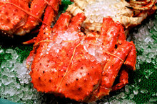 Live/Cooked and Frozen Large Size Norwegian King Crab/ Highly Preserve King Crab Suitable For Consumsuption