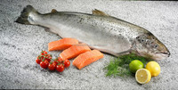 Fresh/Frozen Atlantic Salmon