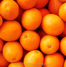 Fresh Orange with good price from Egypt