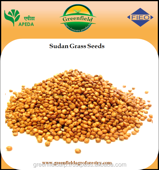 Sorghum sudan grass seeds for sale