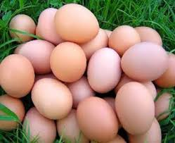 Chicken egg Large medium and small size chicken egg fresh and fertile eggs