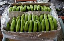 Class A Cavendish Bananas For Sale