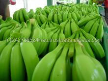 Fresh Cavendish Bananas At Wholesale Prices From Ecuador