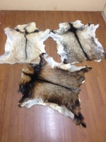 Dry and Salted Cow, goat, Donkey and horse skin and hides